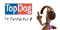 TopDog Insurance